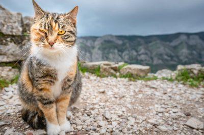 simbolo del gatto