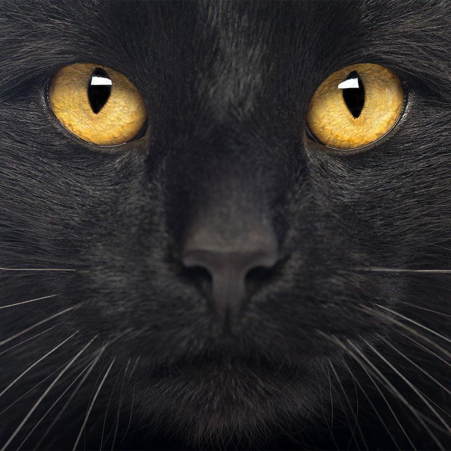 gli occhi di un gatto nero