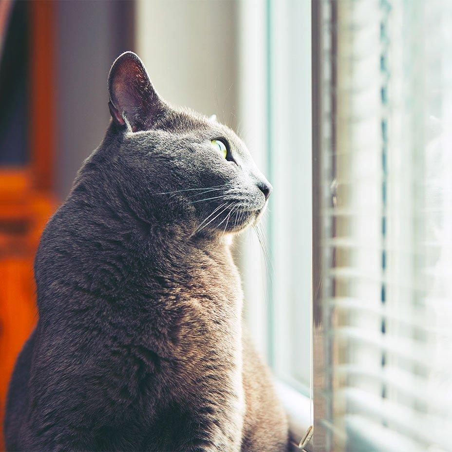 il gatto aiuta a capire noi stessi