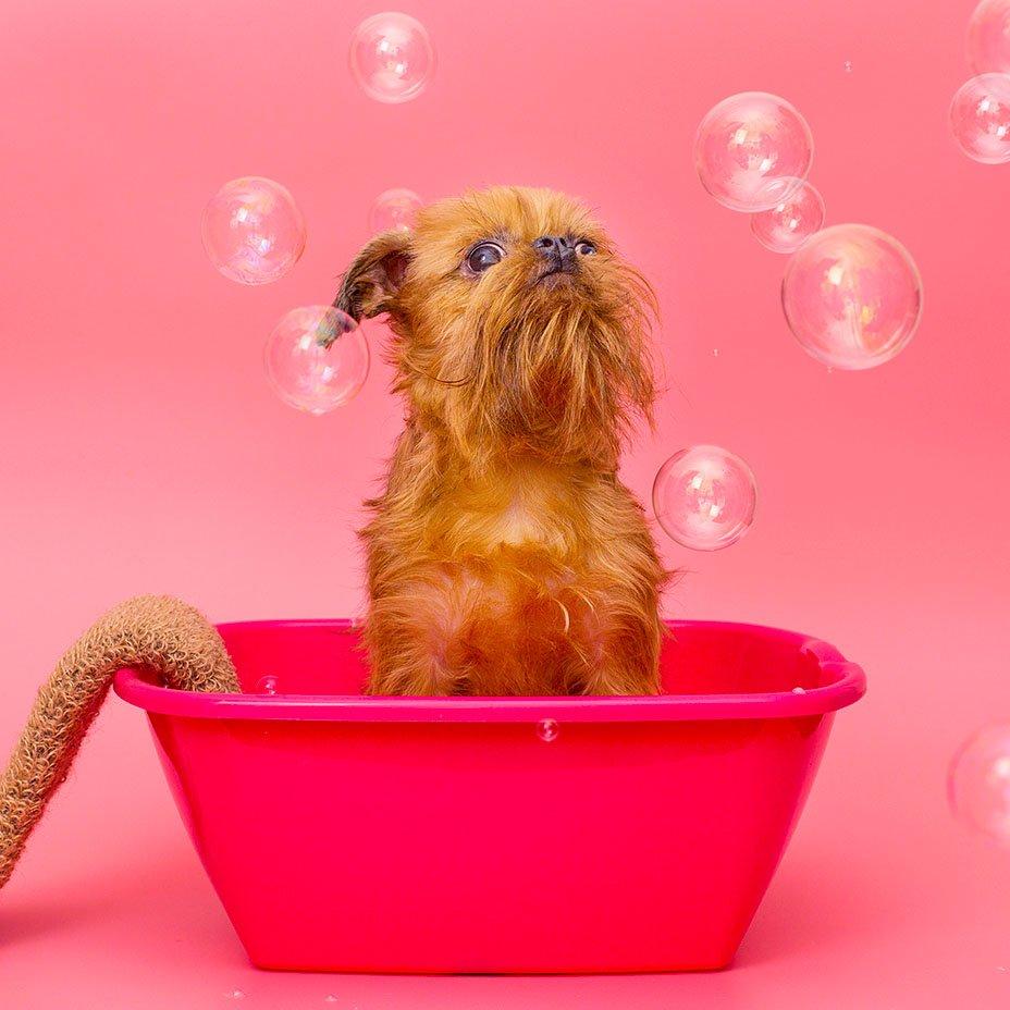 animali domestici e sars-cov-2: quali rischi?