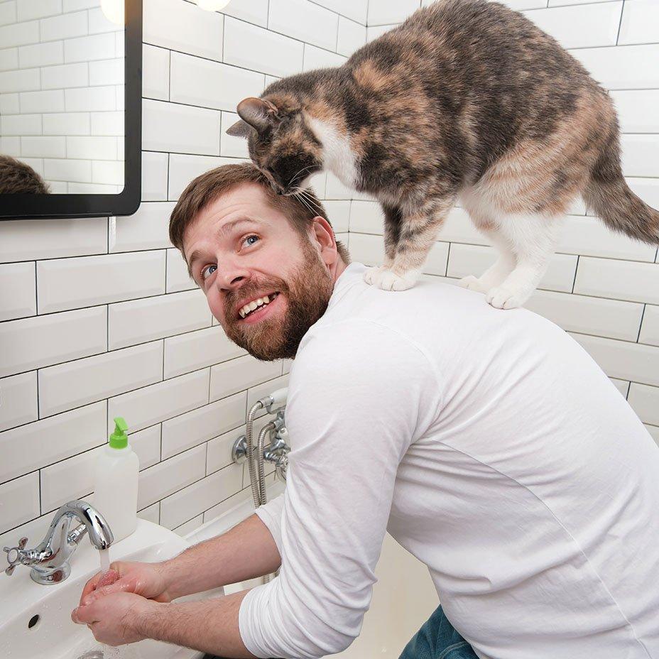 gatti e covid-19: quali rischi?