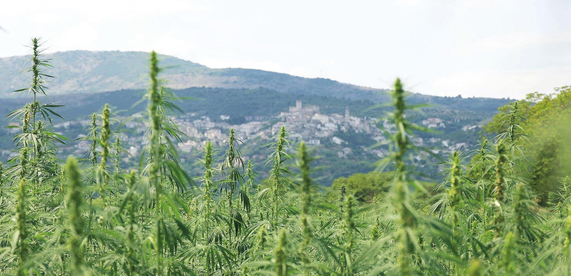 Antica Canapa d'Abruzzo