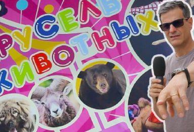 Il circo con gli animali, reportage dalla Russia