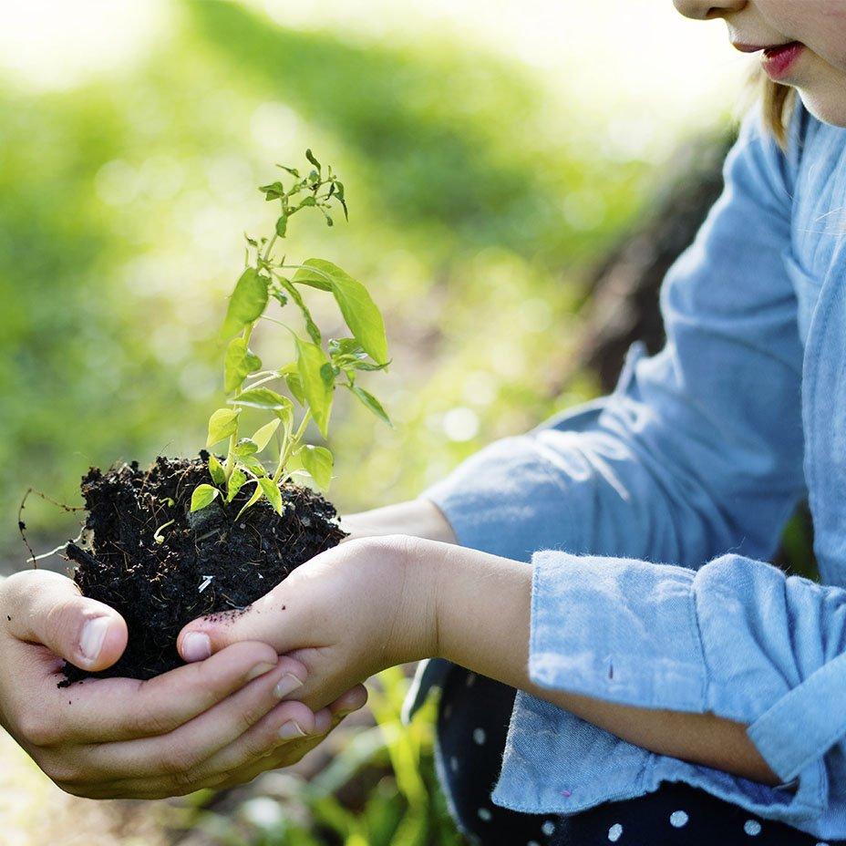 piantando un nuovo albero