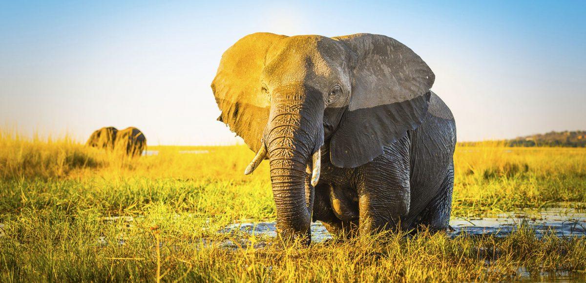 Simbolo dell'Elefante: Forza, Saggezza e Tranquillità