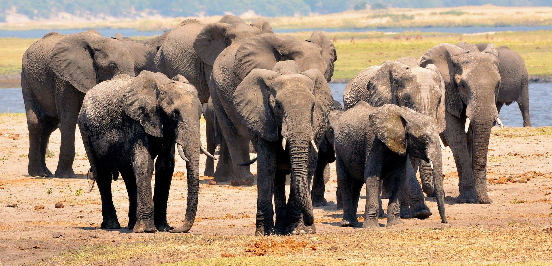 Famiglia di elefanti