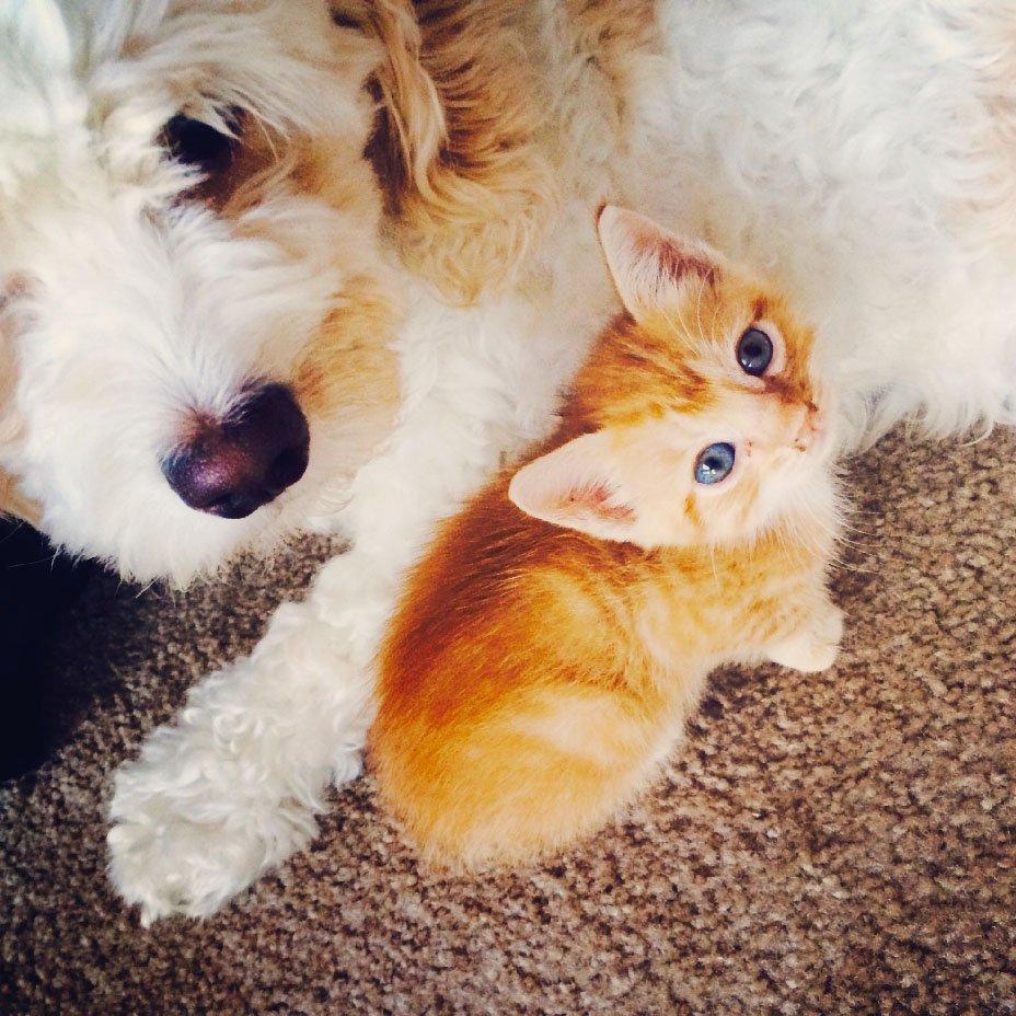 cani e gatti vegani?