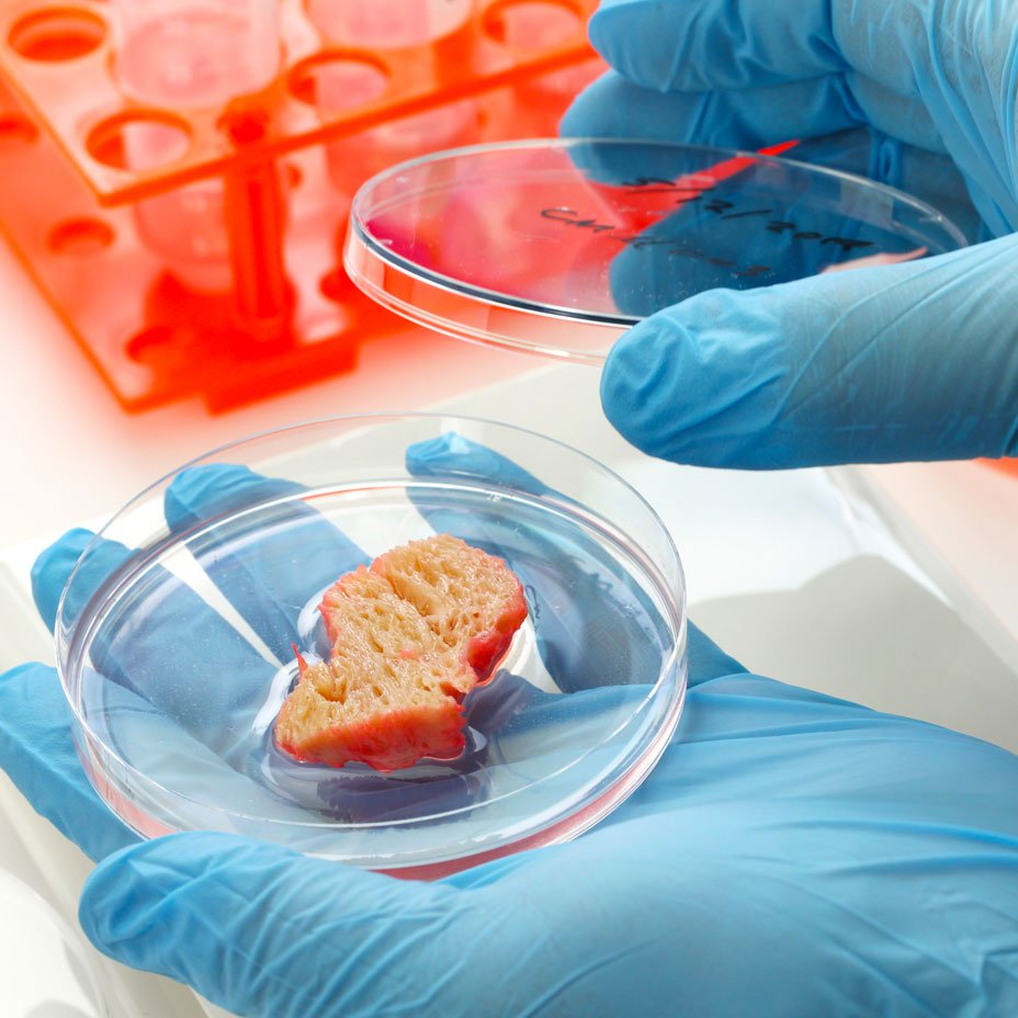 carne coltivata o carne sintetica