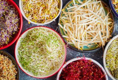 diversi tipi di germogli, abitudine di coltivarli