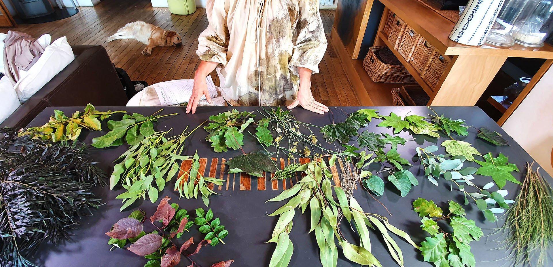 piante per la stampa botanica