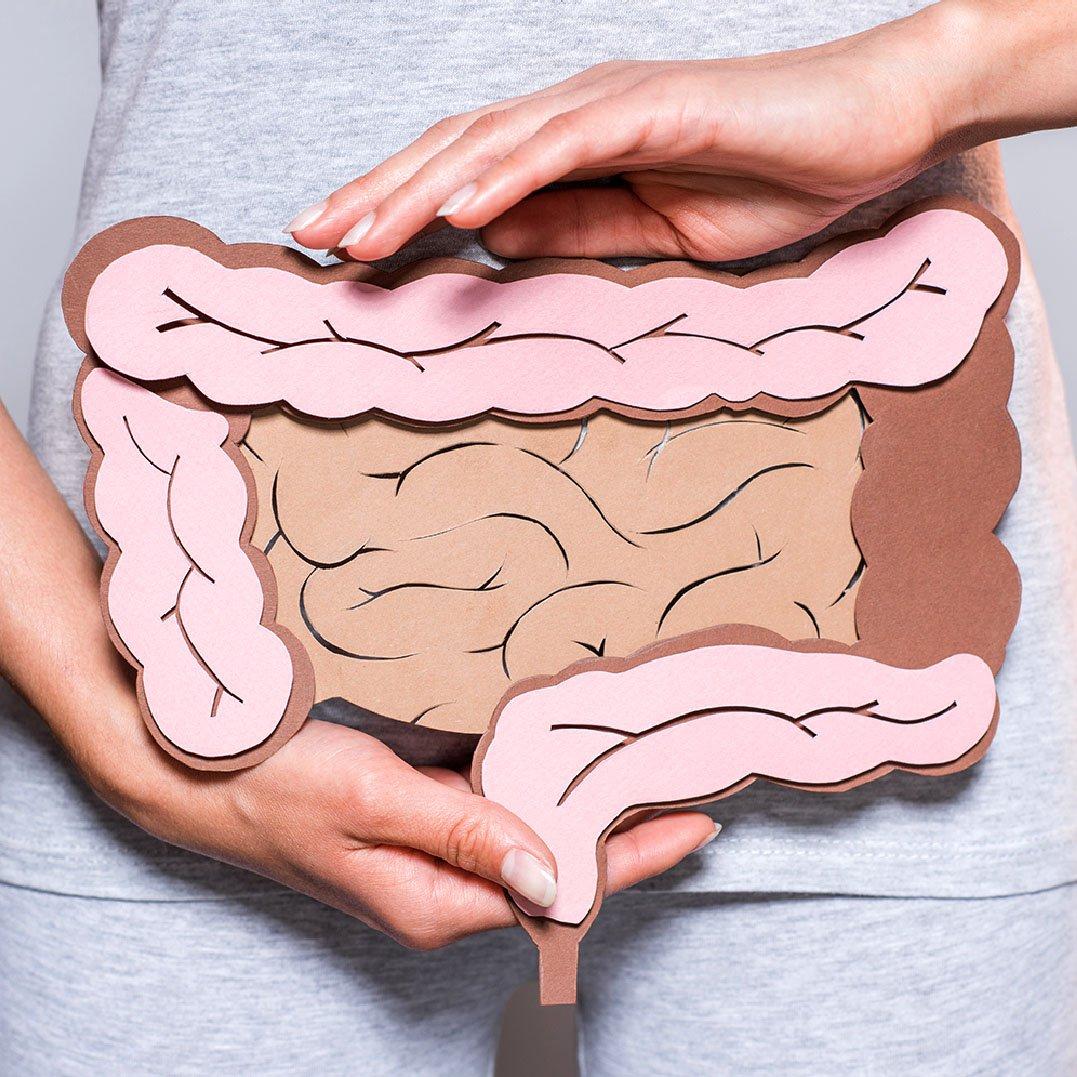 microbiota e intestino