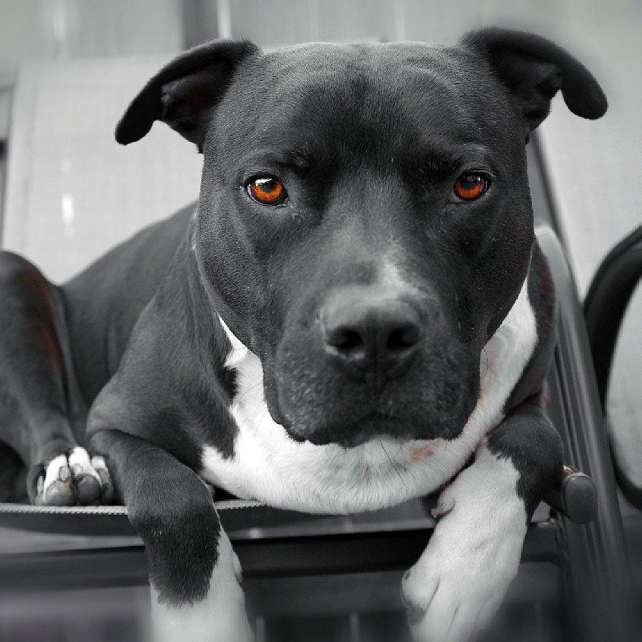 cane, occhi