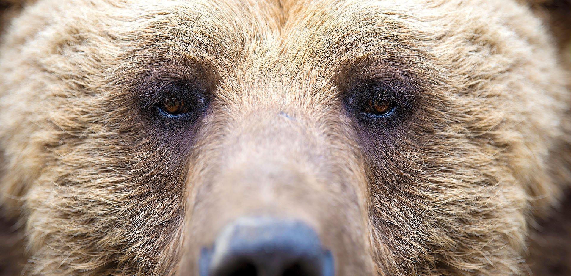 orso, occhi