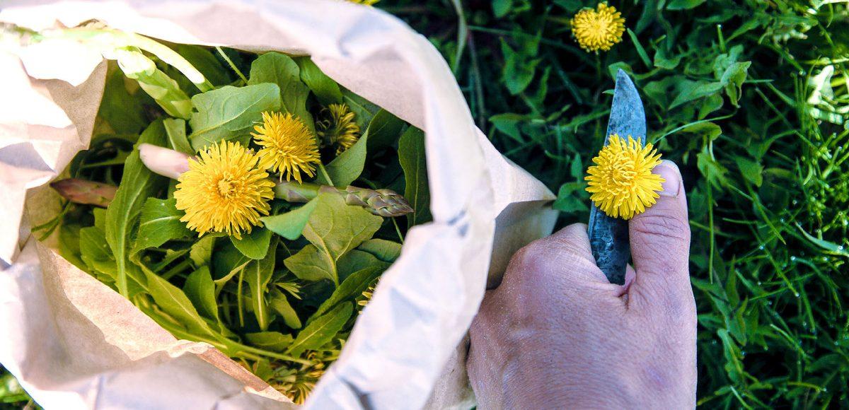 alimurgia, raccogliere piante spontanee