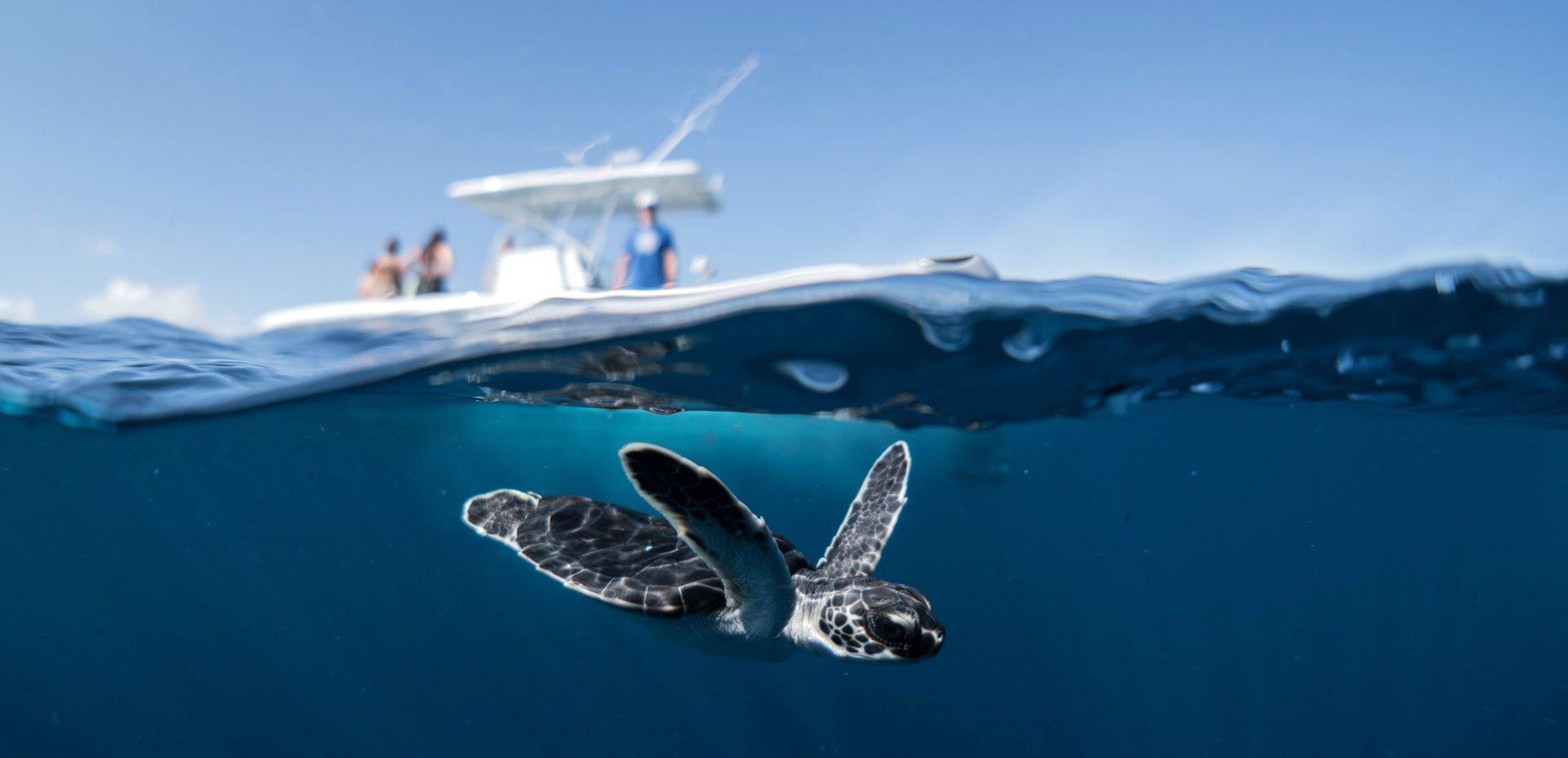 tartaruga nel mare